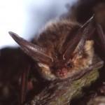BLE bat